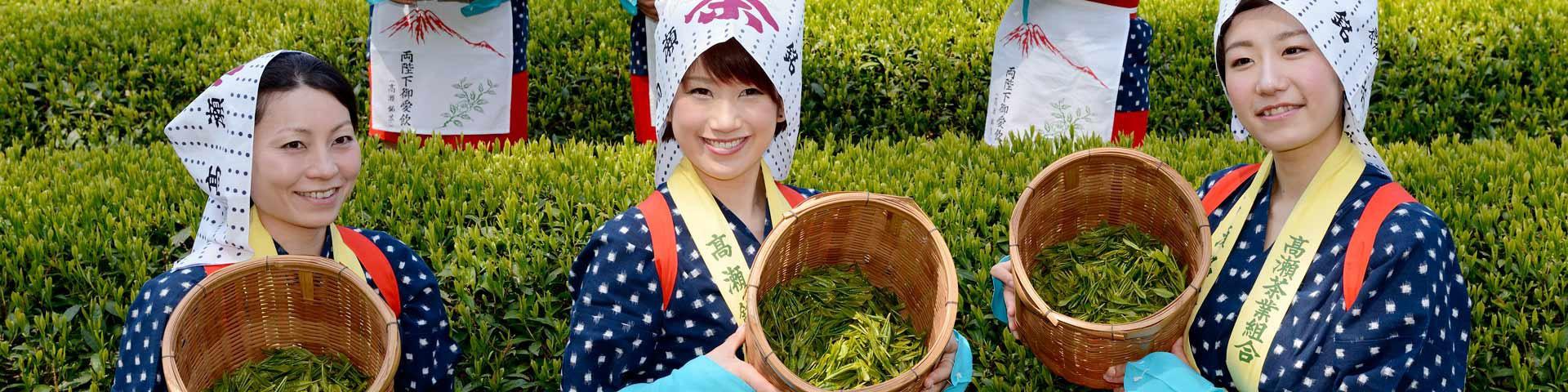 日本飲類 | お茶 | ほうじ茶 | 抹茶